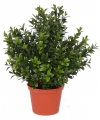 Kunst buxus plant in pot 31 cm