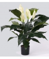 Kunst spathiphyllum 75 cm