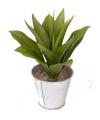Kunstplant aloe vera 22cm