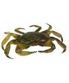Levensechte krab 35 cm