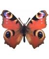 Metalen vlinder pauwenoog 25 x 20 cm