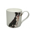 Mok border collie hond