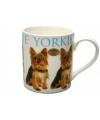 Mok yorkshire terrier hond