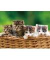 Placemat kittens 3d 40 cm