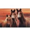Placemat paarden 3d 28 x 44 cm type 2