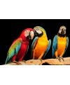 Placemat papegaai 3d 28 x 44 cm