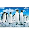 Placemat pinguins 3d 28 x 44 cm