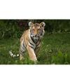 Placemat tijger 3d 28 x 44 cm