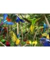 Placemat tropische vogels 3d 30 x 40 cm