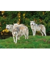 Placemat wolf 3d 40 cm