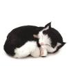 Pluche slapende kat