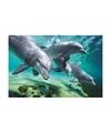 Poster dolfijnen 61 x 92 cm