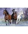 Poster rennende paarden 61 x 91 5 cm