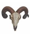 Ram schedel met hoorns 32 cm