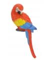 Rode papegaai 21 cm