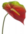Rood met groene anthurium 78 cm