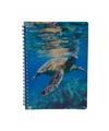 Schildpadden notitieboek 3d 21cm