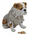 Spaarpot bulldog