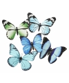 Vlinder magneet blauw groen 13 5 cm