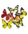 Vlinder magneet geel oranje 13 5 cm