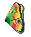Vlinder vleugels gekleurd voor kids
