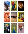 Vogel 3d sticker set