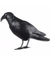 Vogelverschrikker duivenverjager raaf van plastic 48 cm