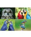 4 x dieren magneten vogels