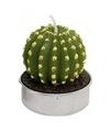 Cactus waxinelichtje 5 cm type 4
