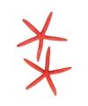 Decoratie rode zeester 17 cm