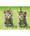 Dieren magneet 3d 2 kittens