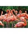 Dieren magneet 3d flamingo