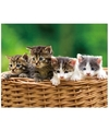 Dieren magneet 3d kittens in mand