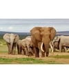 Dieren magneet 3d olifanten